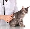 Ветеринарные клиники в Ваде